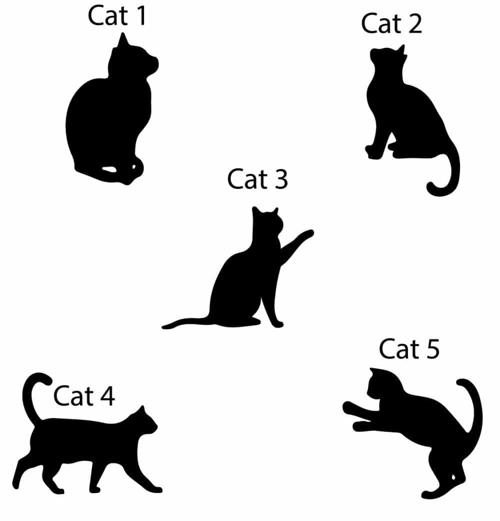 Image of designs for personalised cat keyring - gift for cat owners